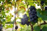 Erntedank 2020 - wir sind dankbar, weil sichere Ernten alles andere als selbstverständlich sind